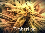 Timberline Herbal Clinic and Wellness Center