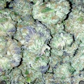 Platinum Girl Scout Cookie